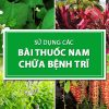 su-dung-cac-bai-thuoc-nam-chua-benh-tri